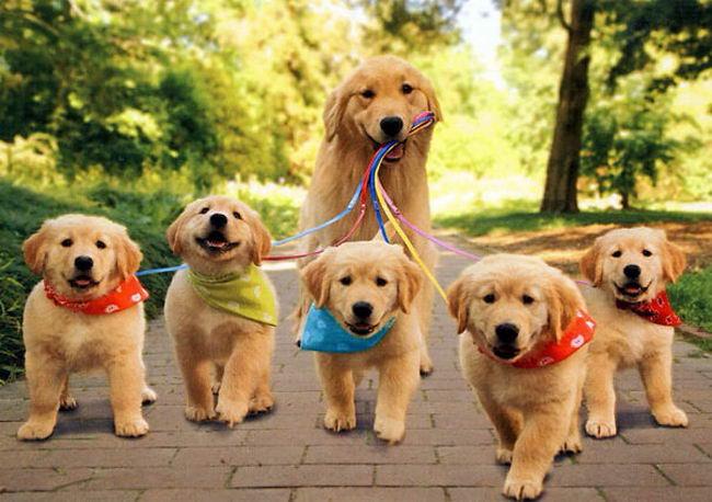 สุนัขน่ารัก 5 ตัว