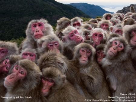 ลิงในห้องแคบ ลิงต่อโต๊ะ หรือ วัฒนธรรมของกลุ่มลิง