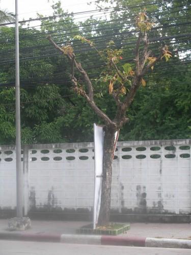 ชะตากรรมต้นไม้ใต้สายไฟฟ้า