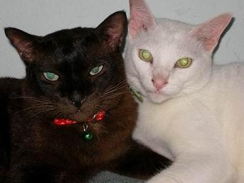 แมวจับหนู ถ้าจับได้ไม่ว่าจะแมวขาวหรือดำ ก็เรียกว่าแมวดี .. จริงหรือ
