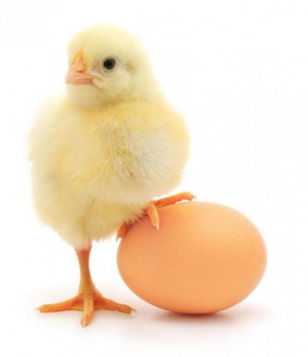 ไก่ กับไข่